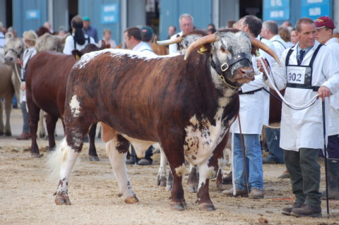 Blackbrook Philosopher - Male Champion Royal Show 2007