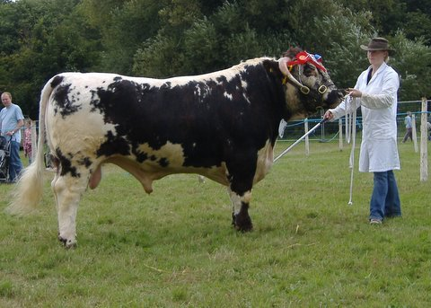 Carreg Equator - Breed & Male Champion Monmouthshire Show 2006