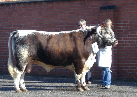 Carreg Everest - Breed & Interbreed Champion Melton Mowbray Show & Sale 2006