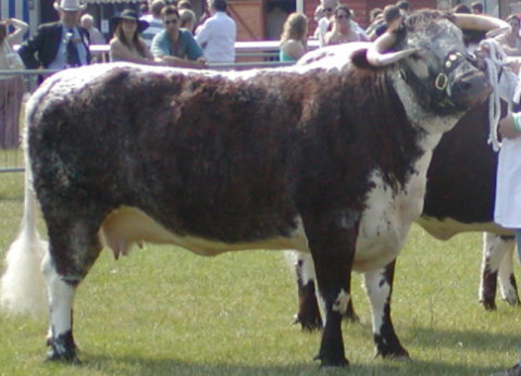 Fishwick Davinia - Reserve Breed & Reserve Female Champion Royal Show 2006