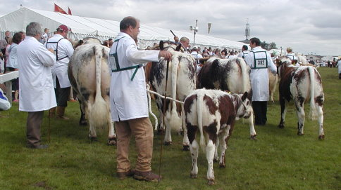 Longhorn Interbreed Team - Great Yorkshire Show 2007