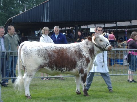 Gorse Mia - Breed & Female Champion Shropshire & West Mids Show 2007