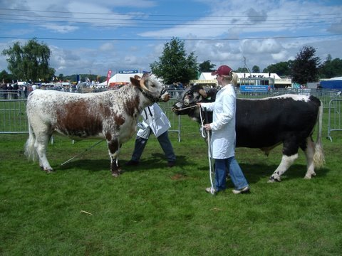 Gorse Mia - Breed & Female Champion with Carreg Gunner - Male & Reserve Breed Champion Shropshire & West Mids Show 2007