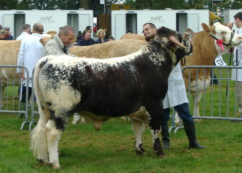 Gorse Monsignor - Reserve Male & Junior Male Champion Monmouthshire Show 2006