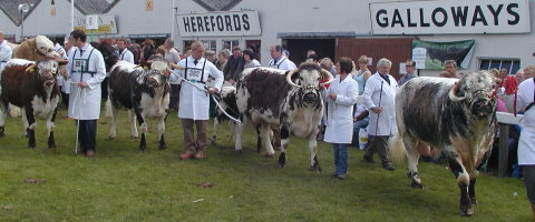 The Longhorn Interbreed Team - Great |Yorkshire Show 2007