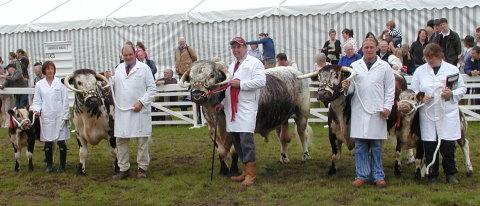 The Longhorn Housewife's Choice Team - Great Yorkshire Show 2007