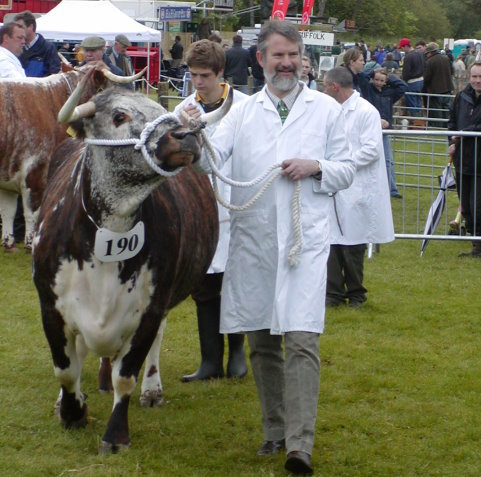 John Pennie leading Wellhead Xcess at Northumberland County Show 2007