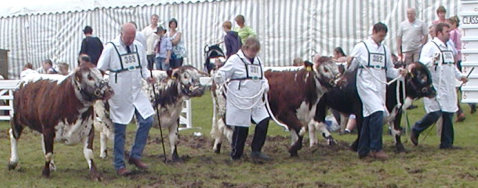 The Longhorn Junior Interbreed Team - Great Yorkshire Show 2007