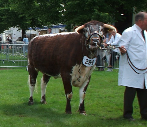 Linton Ffion - Breed & Female Champion Three Counties Show 2007