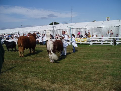 Fishwick Enchantress - Breed & Female Champion GYS 2006