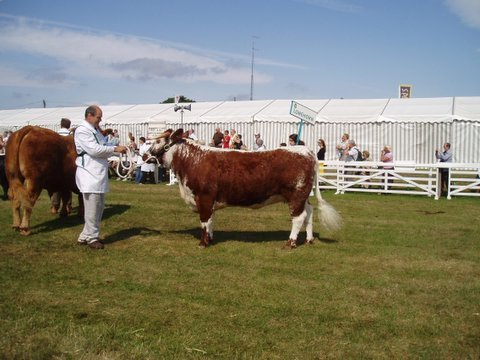 Fishwick Enchantress during Interbreed Class GYS 2006
