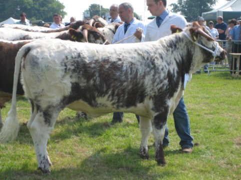 Blackbrook Question - Breed Champion and Junior Champion Rutland Show 2007