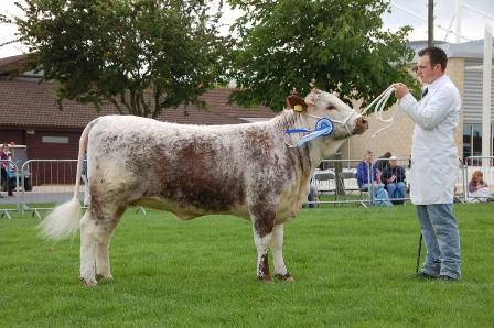 Blackbrook Rhyme - Reserve Breed Champion East of England 2008
