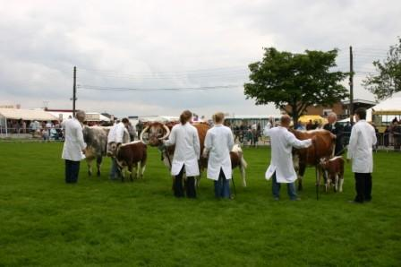 Cow class - East of England 2008