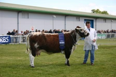 Fishwick Donna Breed Champion Royal Highland 2008
