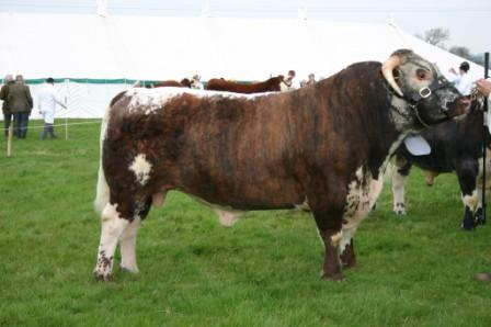 Mr & Mrs Stanley's Blackbrook Philosopher - Breed Champion