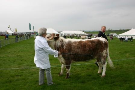 Mrs EM Hallifield's Dunstall Gyspy with judge Clive Roads