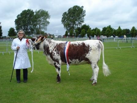 Barlings Greta - Breed Champion Lincolnshire County 2008