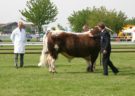 Breed Champion Mr & Mrs JW Stanley's Blackbrook Philosopher