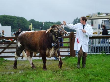 Male & Reserve Champion Dodsleigh Fusilier