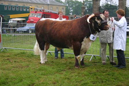 Rutland Breed Champion Gorse Morrisman