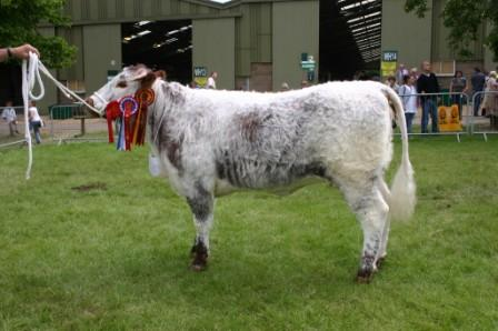 Dunstall Hanna - Breed Champion, Three Counties Minority Breeds Day