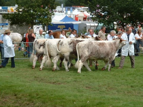 Group of Four, Burwarton Show 2009