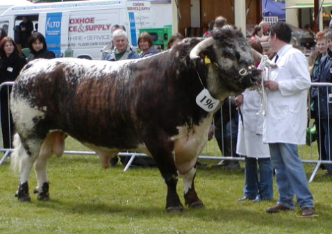 Carreg Cennen - Breed & Male Champion Northumberland County Show 2007