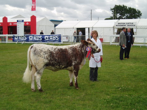 Benchil Fiametta - Reserve Breed and Reserve Female Champion Royal Highland Show 2006