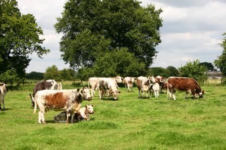 Newton Herd, Summer 2009