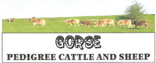 The Gorse Herd